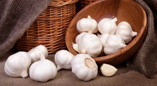 analisa peluang usaha bawang putih